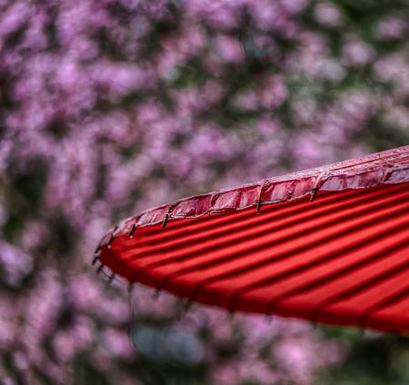 Red Umbrella, kyoto